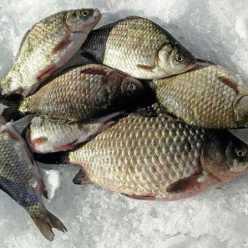 На каких реках и озерах лучшая рыбалка в Бурятии?