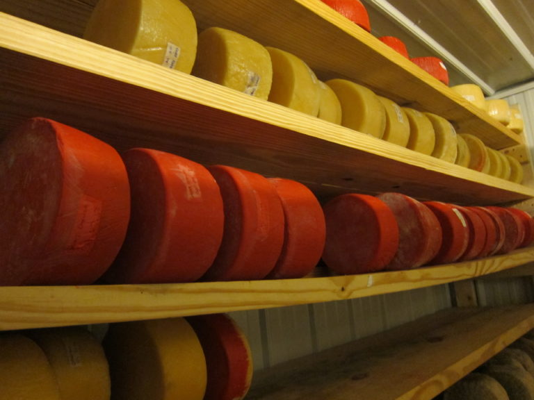 Cheese wheels aging on a buckling shelf