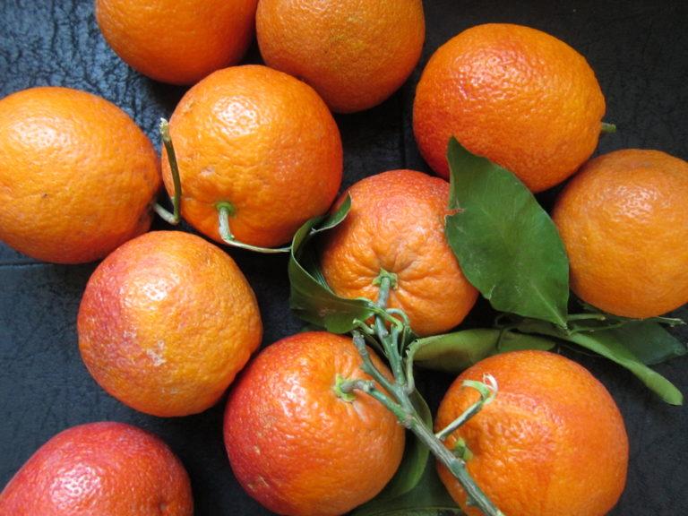 Gazing at those blood orange beauties