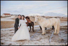Iceland Wedding Couple with Icelandic Horses Photos by Miss Ann
