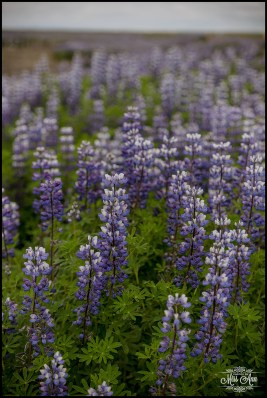 Iceland Wedding Details Flowers
