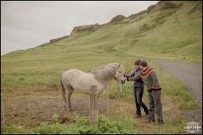 Iceland Wedding Horses