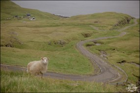 Faroe Island Wedding Photographer-7