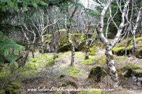Iceland Weddings and Honeymoons Forest Wedding Location
