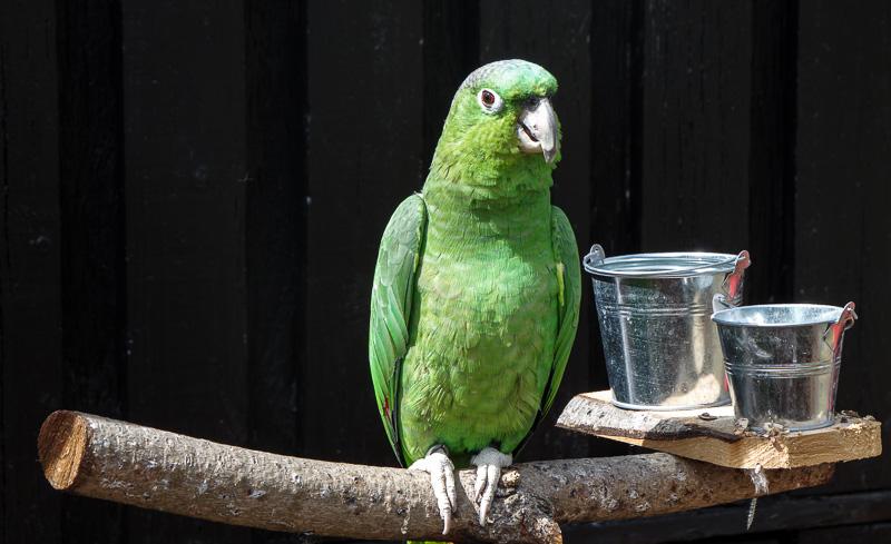slakki bird