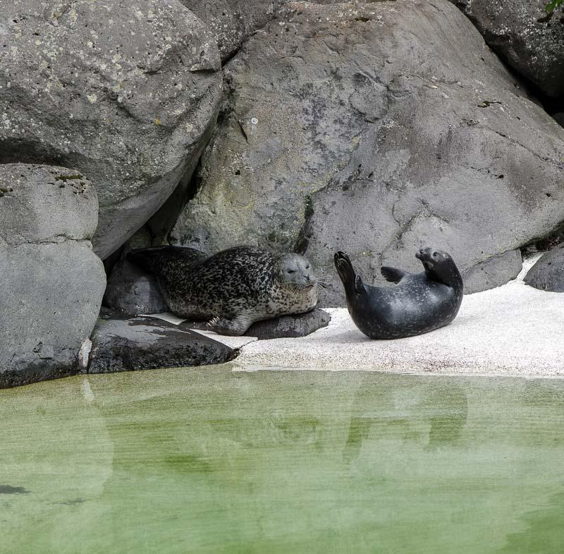 zoo seals