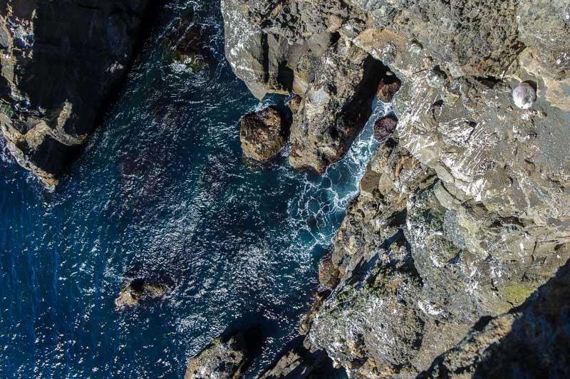 crazy bird cliff