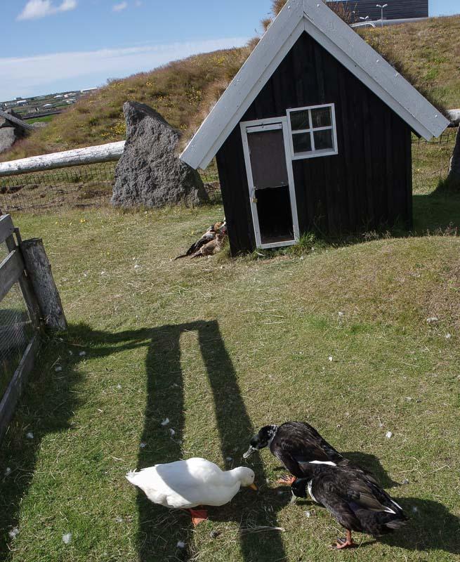 viking museum ducks