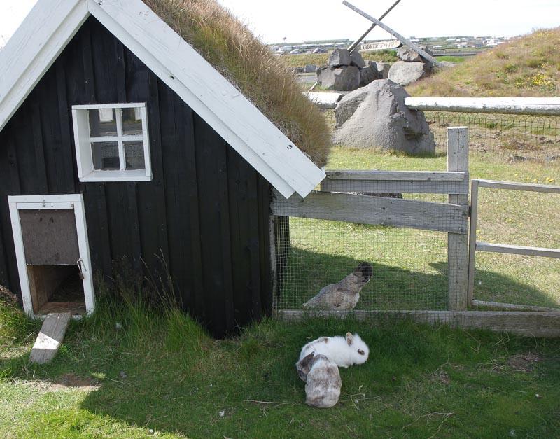 viking museum rabbits