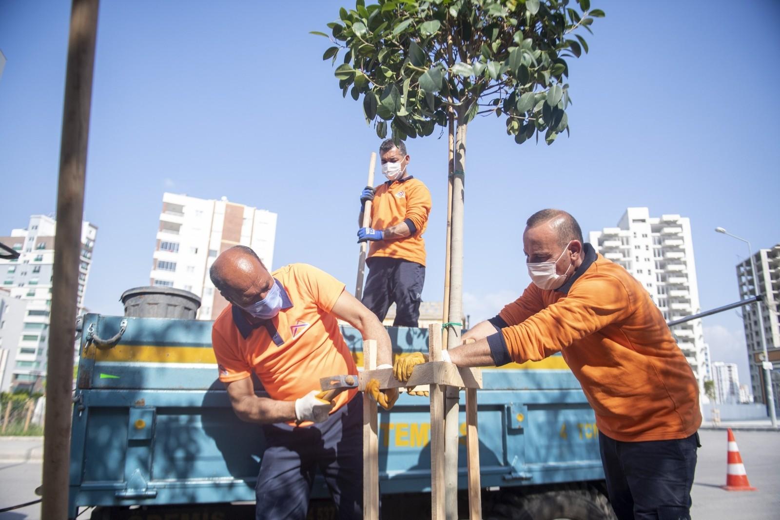 Büyükşehir Belediyesi, Toroslar'ın kaldırımlarına 175 ağaç fidanı dikti