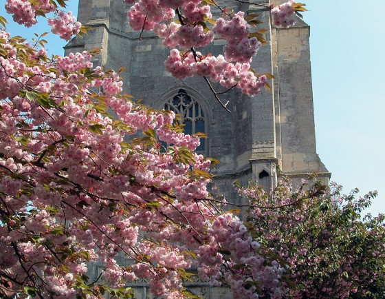 Beccles-church-bloom