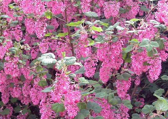 spring-blossom2