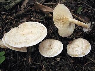 Picking Mushrooms
