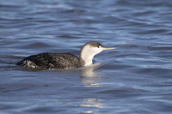 Bird-watch-in-Norfolk