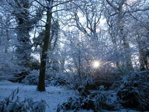 fairhaven-winter walks