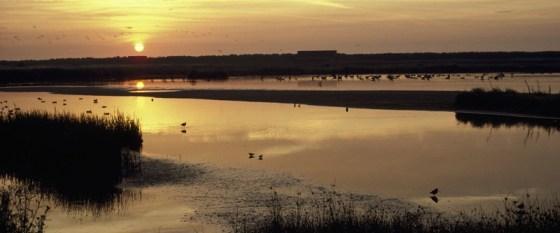dawn-Minsmere-RSPB-Reserve