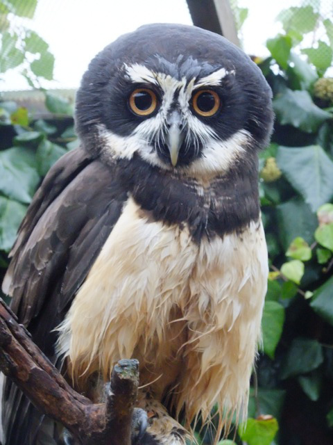 Suffolk Owl Sanctuary for Mums