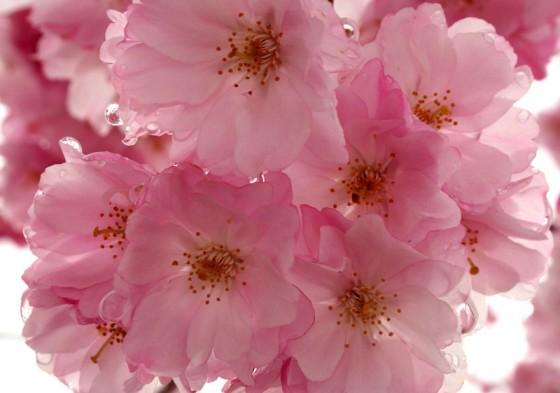 Bungay Flower Club Meeting