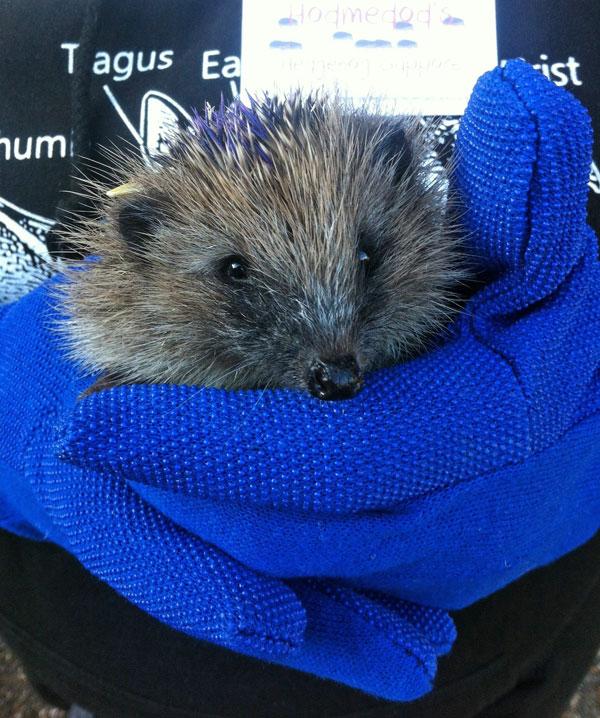 Hedgehog Day with Hodmedod's Hedgehog Support