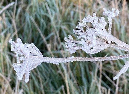 frosty dec 8th - 1 (1)