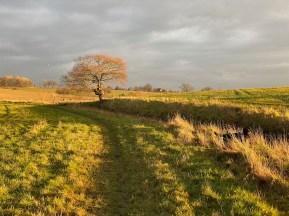 January 2021 Late winter sun in the waveney valley - 4