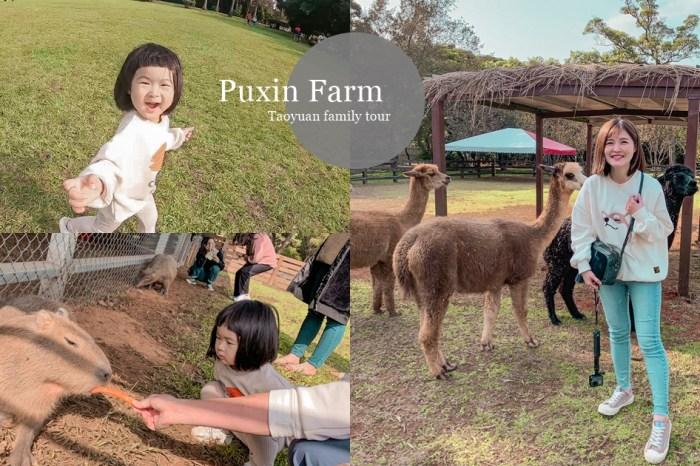 不用到日本,台灣就有水豚君!草泥馬、乳牛、餵羊、租帳篷露營烤肉,埔心牧場一次擁有,桃園親子旅遊