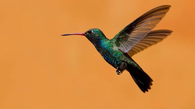 「Altrendo Images/Shutterstock.com」