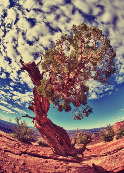 Photo: Canyon Tree