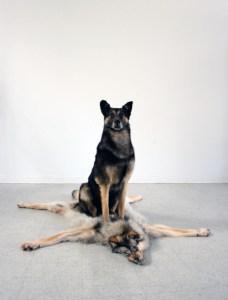 Cachorro sobre pele de outro cachorro