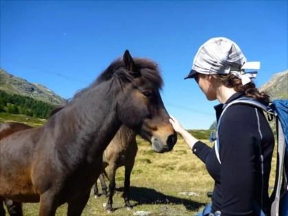 Chaskee Visor Snap Cap + Pferd