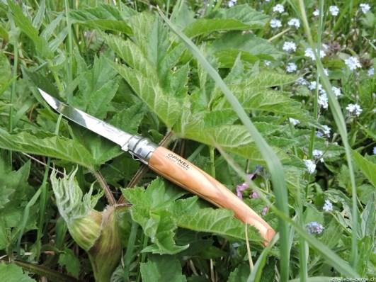 Opinel Slim knife N°10 olive wood 1