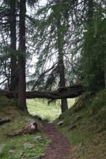 Tingle Trail Via Spluga 130