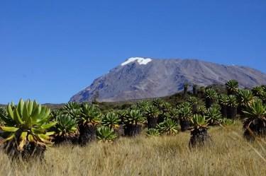 Trekkingreise Kilimanjaro 2