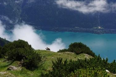 Naturpark Karwendel, Achensee 20