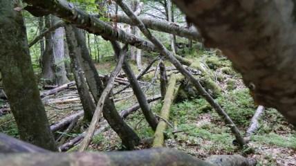 40 Jahre Nationalpark Berchtesgaden 10