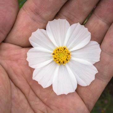 Achtsamkeit üben – Entdecke die Natur der Blume