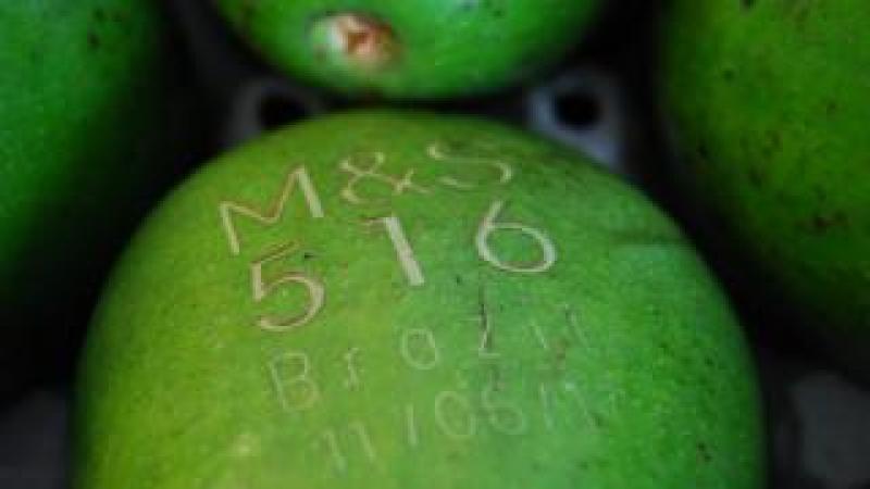 Avocado with laser tag