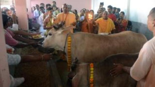 Indian monks from the International Society of Krishna Conciousness (ISKON) along with Hindu devotees worship cows as part of Govardhan Puja celebrations at ISKON temple in Siliguri on November 12, 2015.