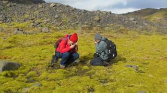 Early plants would have looked much like this lava field in Iceland