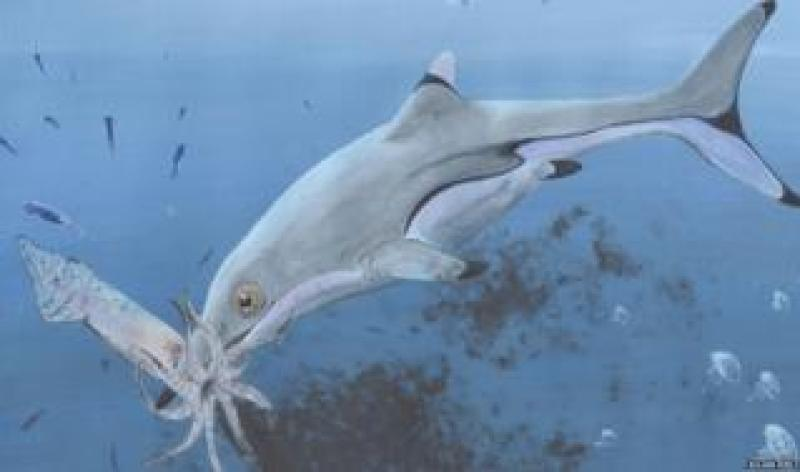 What the ichthyosaur might have looked like
