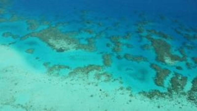 An aerial view of the Great Barrier Reef. Deep blue water in the distance and lighter blue in shallower water in the foreground. Coral patterns across the middle.