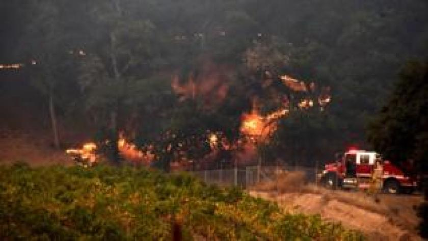 Trees burn on the edges of a vineyard in Santa Rosa, California, October 11, 2017