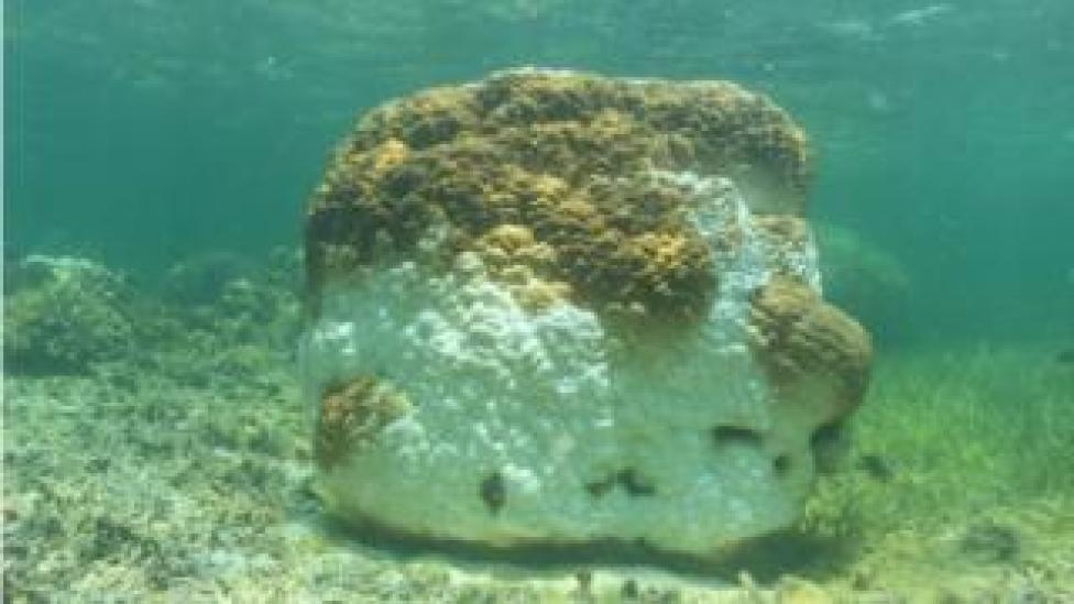 Coral bleaching at the Dongsha Atoll