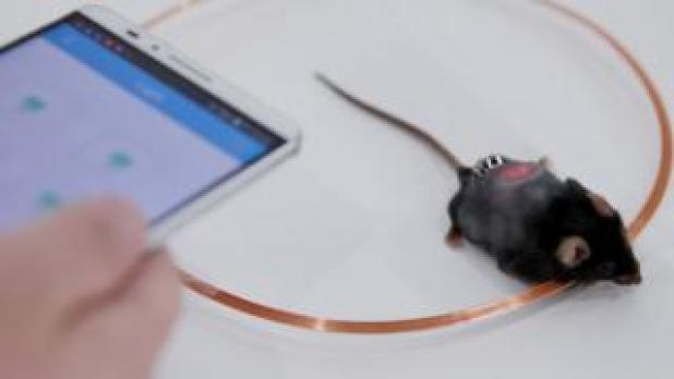 Smartphone controls mice cells
