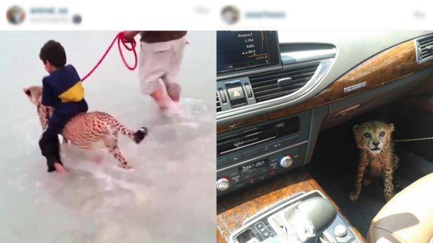 Social media cheetahs