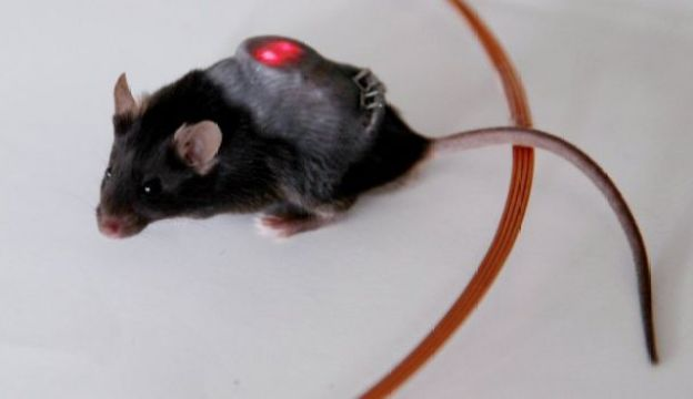 Mouse with implant