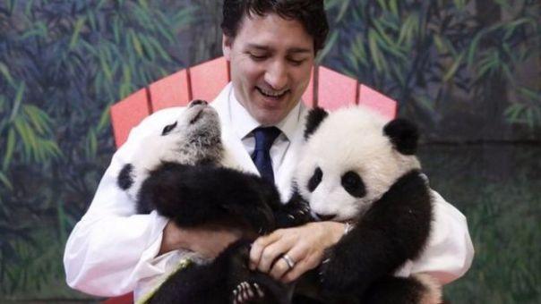 Justin Trudeau con dos osos panda en el zoológico de Toronto.