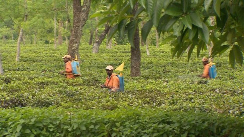 Workers spraying pesticides without protective equipment