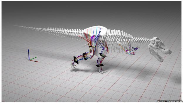 T-rex modelling of gait