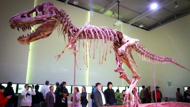Tyrannosaurus bataar skeleton